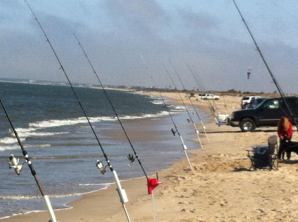 Black drum striped bass bluefish and spiny dogfish are for Delaware surf fishing