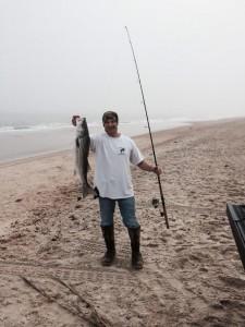 keeper striped bass in the surf of Delaware, rockfish, rock the rocks, jetty jockeys, sandblasters, migratory atlantic fish, fall run, spring run, bunker heads, chunkin bunka