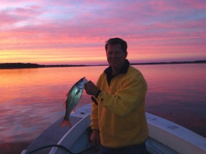 isle of wight bay, short striped bass,