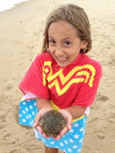 burr fish, cape henlopen state park, surf fishing, delaware, sussex county