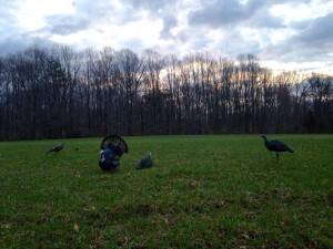 Turkey Decoys, delaware youth turkey hunting day