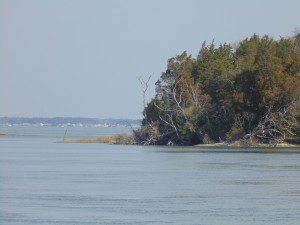 masseys ditch, sharks in rehoboth bay, inland bays, delaware, sussex county