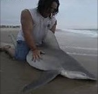 Bethany Beach Shark Fishing Video Being Investigated by DNREC