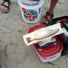 Weakfish Tagging Project