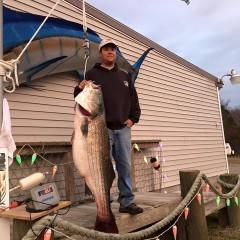 Big Striped Bass Hitting Virginia