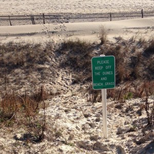 protected dunes, keep off the dunes, cape henlopen state park, delaware, sussex county