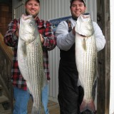 First Migratory Bass Show up in Delaware Bay